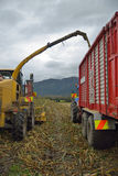 Harvesting maize for silage. Farmers harvest a crop of maize for silage on a dairy farm in Westland, New Zealand Royalty Free Stock Image