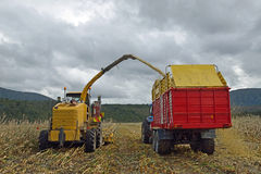 Harvesting maize for silage. Farmers harvest a crop of maize for silage on a dairy farm in Westland, New Zealand Stock Photos