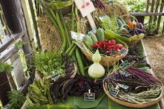Harvesting many fresh vegetables and fruits and Homegrown vegetable. For show and sale for thai people in Vegetable and Flora Festival at Nonthaburi, Thailand Royalty Free Stock Photo