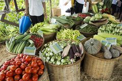 Harvesting many fresh vegetables and fruits and Homegrown vegetable. For show and sale for thai people in Vegetable and Flora Festival at Nonthaburi, Thailand stock photo