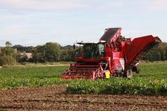 Harvesting in Norfolk Stock Image