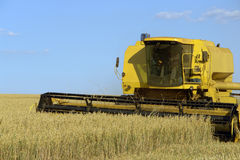 Harvesting oat. With yellow machine Royalty Free Stock Photo