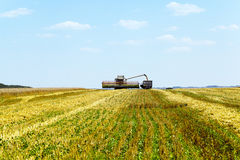 Harvesting Of Cereals Royalty Free Stock Image