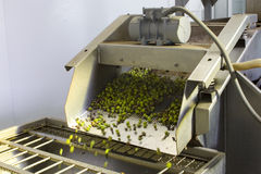 Harvesting olives. Machinery that is used to wash the olives Stock Photography
