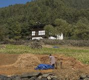 Harvesting at Phobjikha Valley. Kingdom of Bhutan Stock Photo