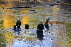 Harvesting pond. Fishermen harvest the pond of the Castle in cerveny Hradek in Jirkov - Czech Republic October 24, 2015. It is the Czech tradition Royalty Free Stock Photos