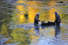Harvesting pond. Fishermen harvest the pond of the Castle in cerveny Hradek in Jirkov - Czech Republic October 24, 2015. It is the Czech tradition stock photos