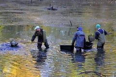 Harvesting pond. Fishermen harvest the pond of the Castle in cerveny Hradek in Jirkov - Czech Republic October 24, 2015. It is the Czech tradition stock photo