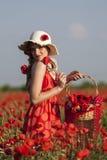 Harvesting poppy Stock Photography