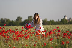 Harvesting poppy Royalty Free Stock Images