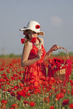Harvesting poppy. Young woman harvesting poppy in a poppy field Stock Photos
