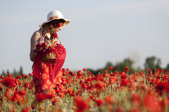 Harvesting poppy. Young woman harvesting poppy in a poppy field Royalty Free Stock Images