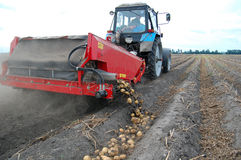 Harvesting potato Stock Images
