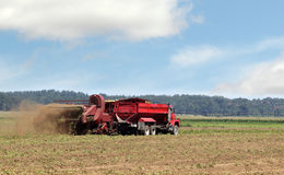 Harvesting Potato Crop Royalty Free Stock Images