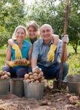 Harvesting potatoes Stock Photo