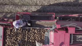 Harvesting potatoes with a combine stock video footage