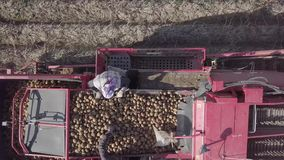 Harvesting potatoes with a combine stock video
