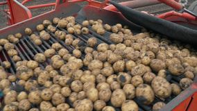 Harvesting potatoes using by a modern potato harvester stock video
