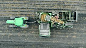 Harvesting process of potatoes held by several workers and a tractor in a top view stock footage