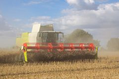 Harvesting rapeseed in a combine Stock Image