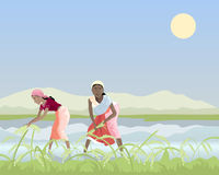 Harvesting rice. An illustration of two asian women labourers harvesting rice in a paddy field under a blue sky Royalty Free Stock Photography