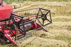 Harvesting rice. Combine machine working and harvesting rice in the  field Royalty Free Stock Images
