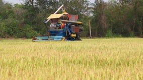 Harvesting rice stock video