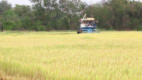 Harvesting rice stock footage