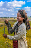 Harvesting Rice in The Fields Royalty Free Stock Image