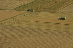 Harvester and tractor harvesting rice fields stock image