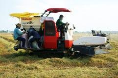 Harvesting ripe rice on paddy field Stock Photos