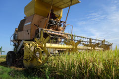 Harvesting ripe rice on paddy field. SEKINCHAN, MALAYSIA- NOV 12; Worker uses machine to harvest rice on paddy field in Sekinchan, Malaysia on November 12, 2014 Stock Photo