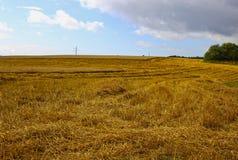 Harvesting ripe rye ears in a field Stock Photography