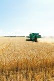 Harvesting ripe wheat in caucasus region Stock Photography