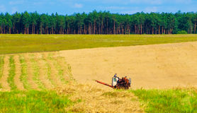 Harvesting of rye Stock Photography