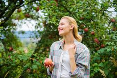 Harvesting season concept. Woman hold apple garden background. Farm produce organic natural product. Girl rustic style royalty free stock photos