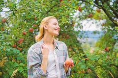 Harvesting season concept. Woman hold apple garden background. Farm produce organic natural product. Girl rustic style royalty free stock photography