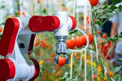 Harvesting with smart robotic farmers in agriculture futuristic robot automation to work to spray chemical fertilizer. Or increase efficiency royalty free stock image