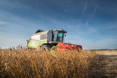 Harvesting of soy bean Stock Photography