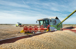 Harvesting of soy bean Royalty Free Stock Images