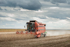 Harvesting of soy bean Royalty Free Stock Image