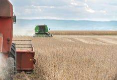 Harvesting of soy bean field Stock Photos