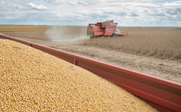Harvesting of soy bean field Royalty Free Stock Photo