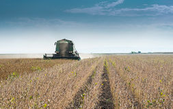 Harvesting of soy bean field Royalty Free Stock Image