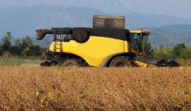Harvesting soybean with a combine harvester in the beginning of autumn.  royalty free stock images