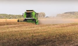 Harvesting of soybean field with combine Stock Image