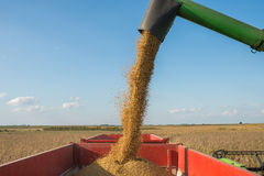 Harvesting of soybean Royalty Free Stock Image