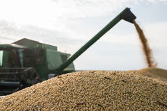 Harvesting of soybean Stock Photography