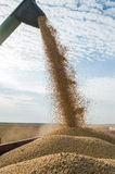 Harvesting of soybean Royalty Free Stock Photo