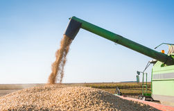 Harvesting of soybean Royalty Free Stock Photos